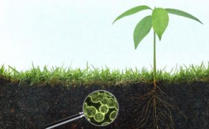 Benefits of Microbes in the Soil