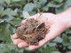 Benefits of Using Langbeinite Fertilizer