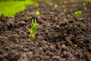 How to Control Soil-Borne Diseases