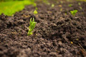 How to Control Soil-Borne Diseases