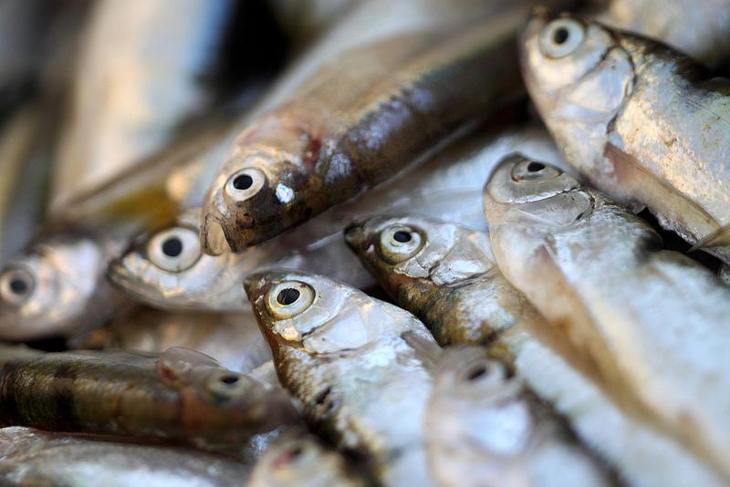 Fish Emulsion Fertilizer