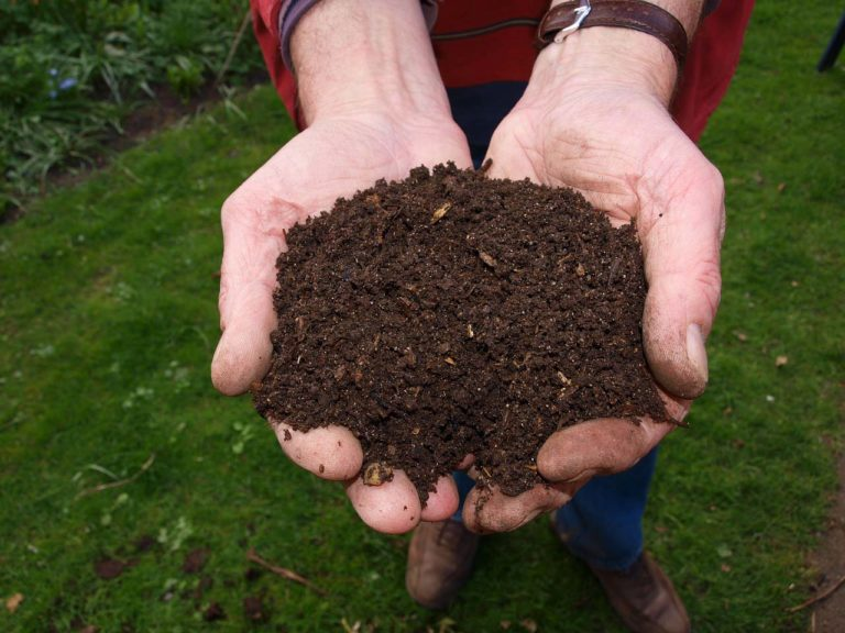 How Compost Helps Your Soil