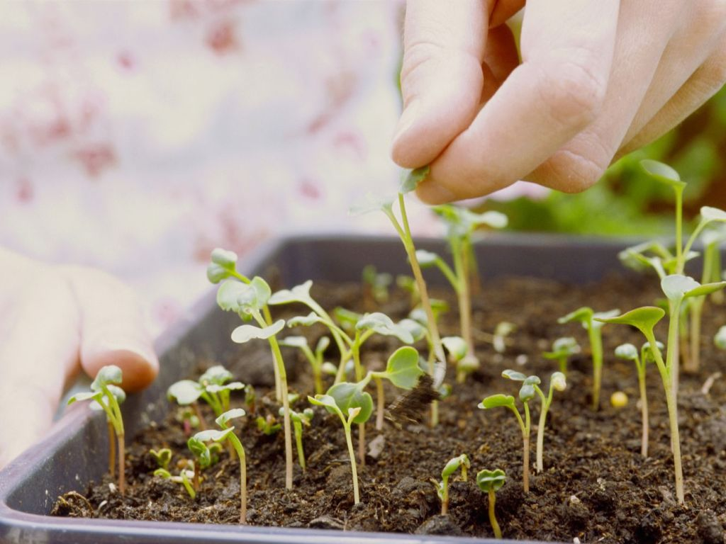 How to Add Calcium to Garden Soil
