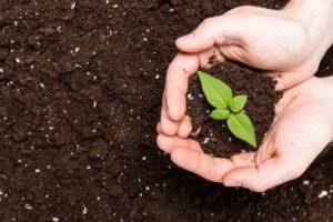 How to Improve Chalky Dusty Soil