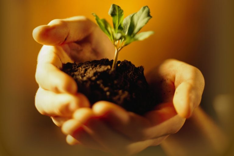 How to Lower Potassium Levels in Soil