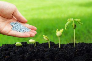 Should I Fertilize Seedlings