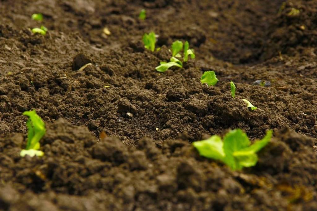 Should You Fumigate Soil?