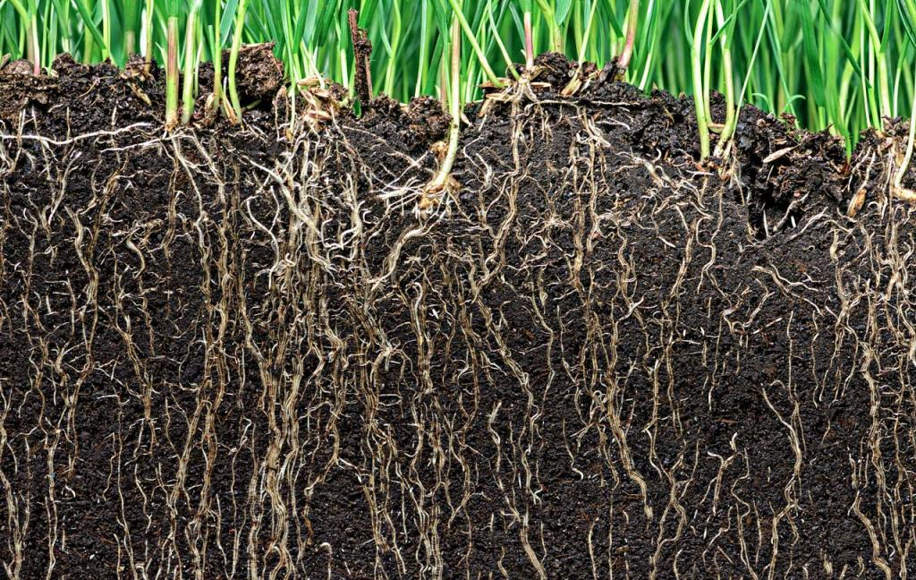 How Soil Microbes Adapt to Different Climate