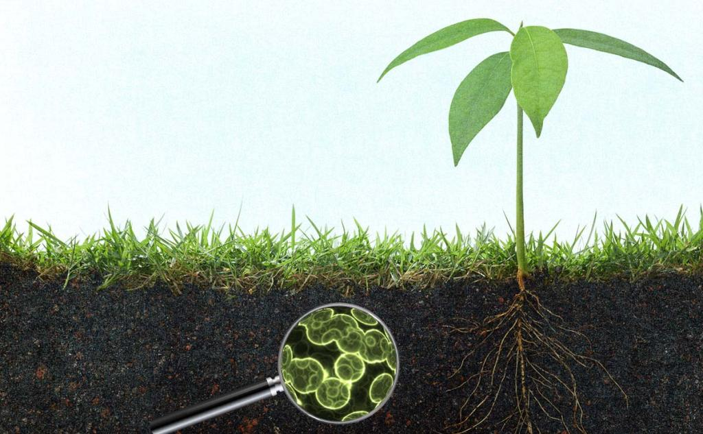 How Do Soil Microbes Affect the Nutrients in the Soil