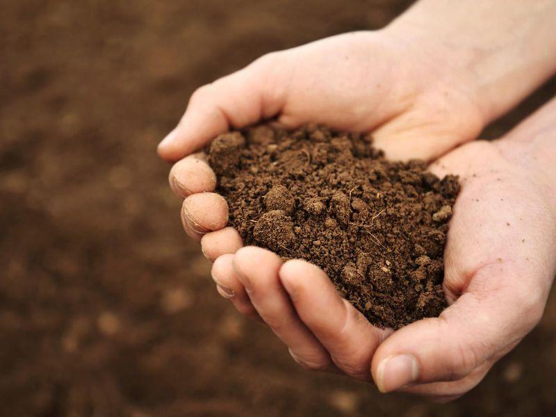 Soil Moisture Content Testing