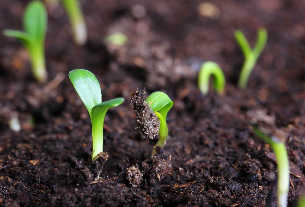 Soil Moisture Terminology