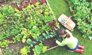 6 Tips To Building A Sustainable Garden