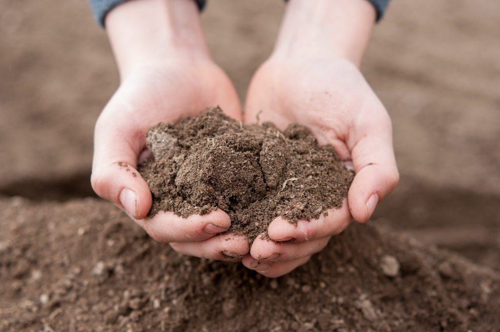 Testing Soil for Pests and Disease