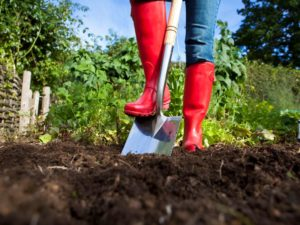 Tips for Using Manure in the Garden