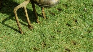 Aeration: Why, How & When to Aerate Your Lawn