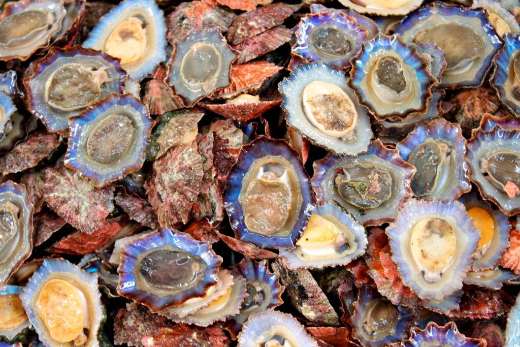 What is Shellfish?
