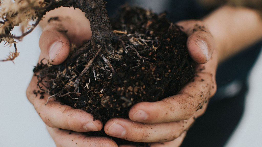 Topsoil VS Garden Soil