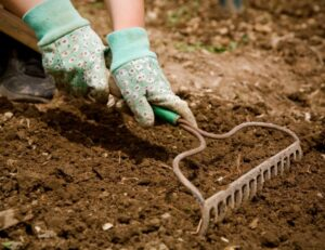 Effects of Soil Tilling in the Garden