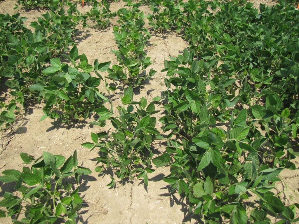 How to Calculate Fertilizer Application