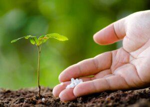Can You Use Urea to Fertilize Plants?