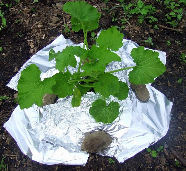 Aluminum Foil and Your Garden