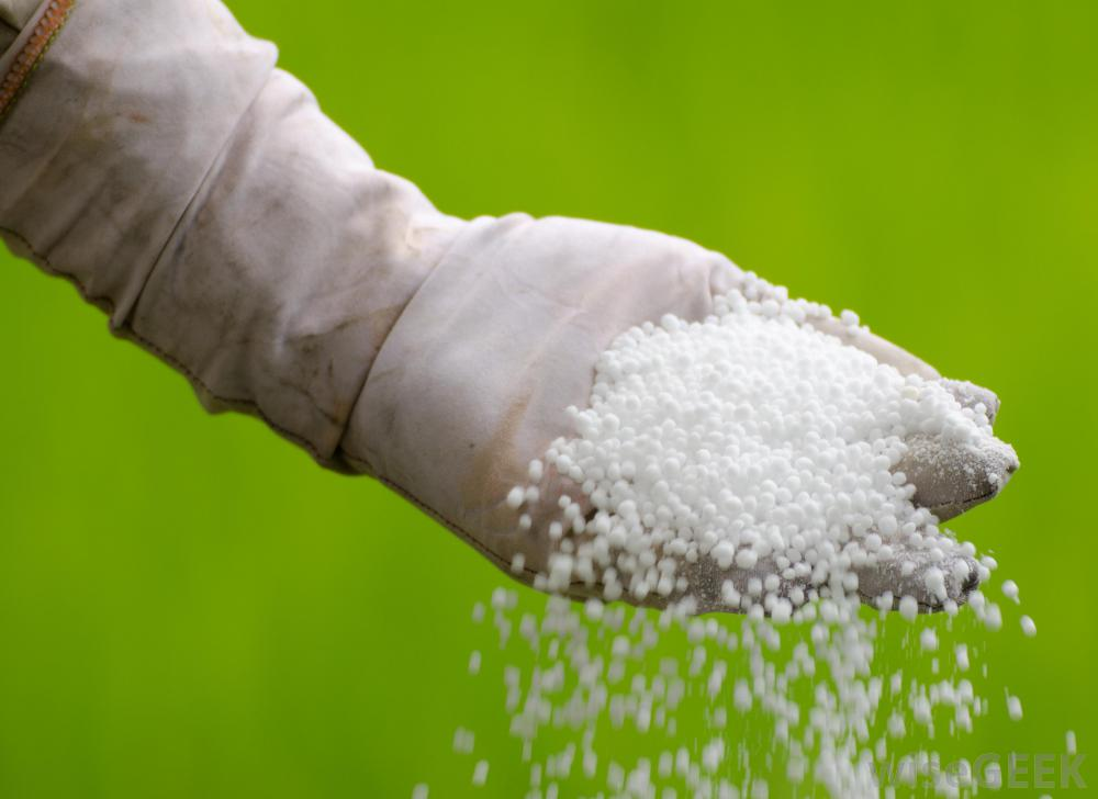 Can You Use Urea to Fertilize Plants?